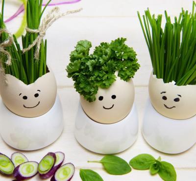 Jajka faszerowane ziołami